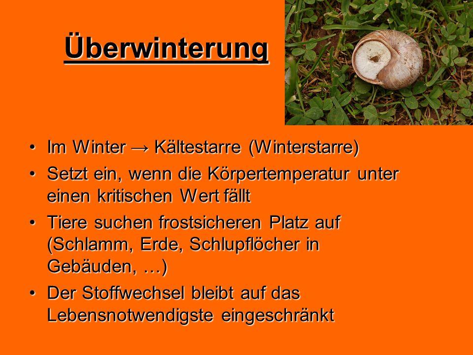 Überwinterung Im Winter → Kältestarre (Winterstarre)