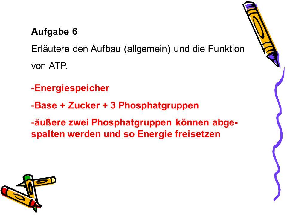 Aufgabe 6 Erläutere den Aufbau (allgemein) und die Funktion. von ATP. Energiespeicher. Base + Zucker + 3 Phosphatgruppen.