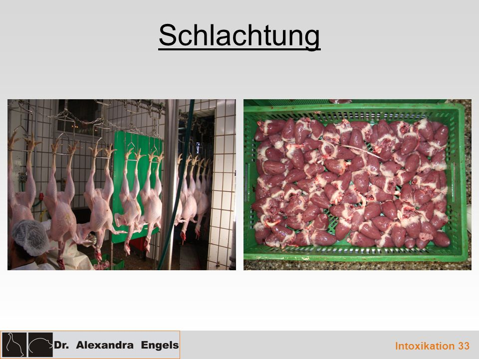 Schlachtung Intoxikation 33
