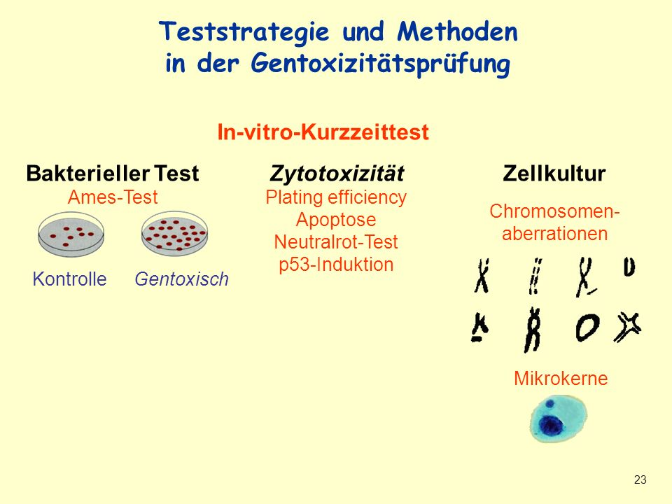 Teststrategie und Methoden in Gentoxizitätsprüfung