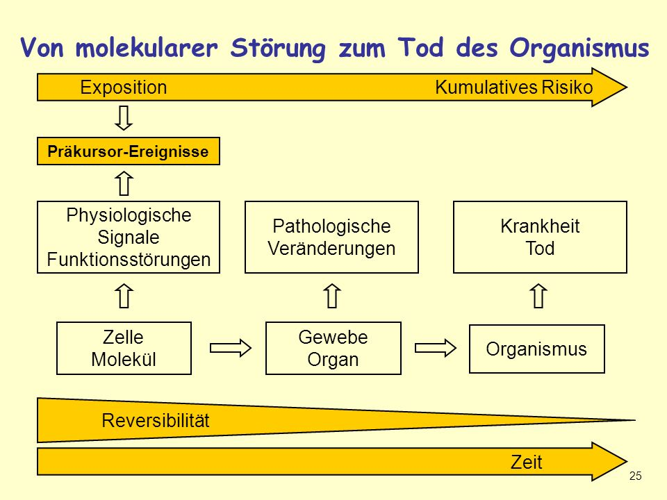 Systembiologie – Von molekularer Störung zum Tod des Organismus