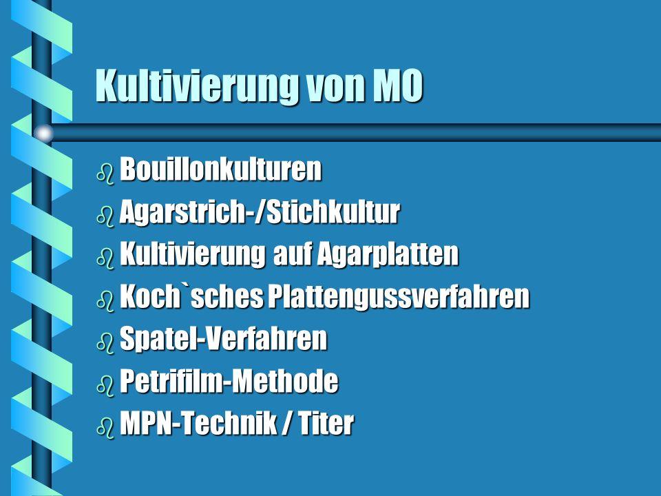 Kultivierung von MO Bouillonkulturen Agarstrich-/Stichkultur