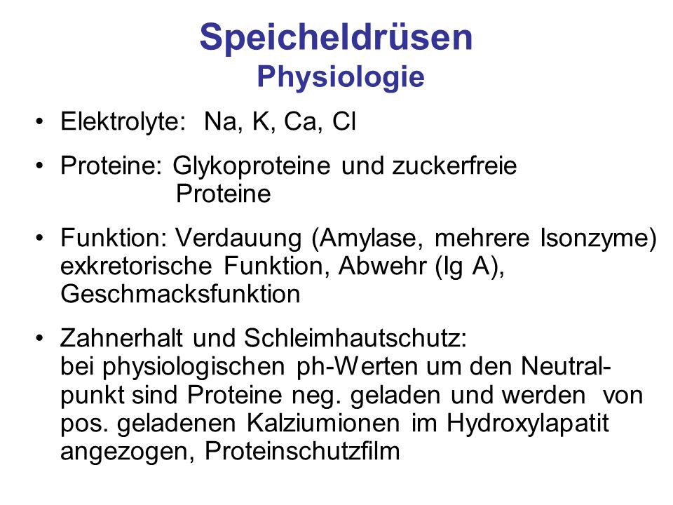 Speicheldrüsen Physiologie