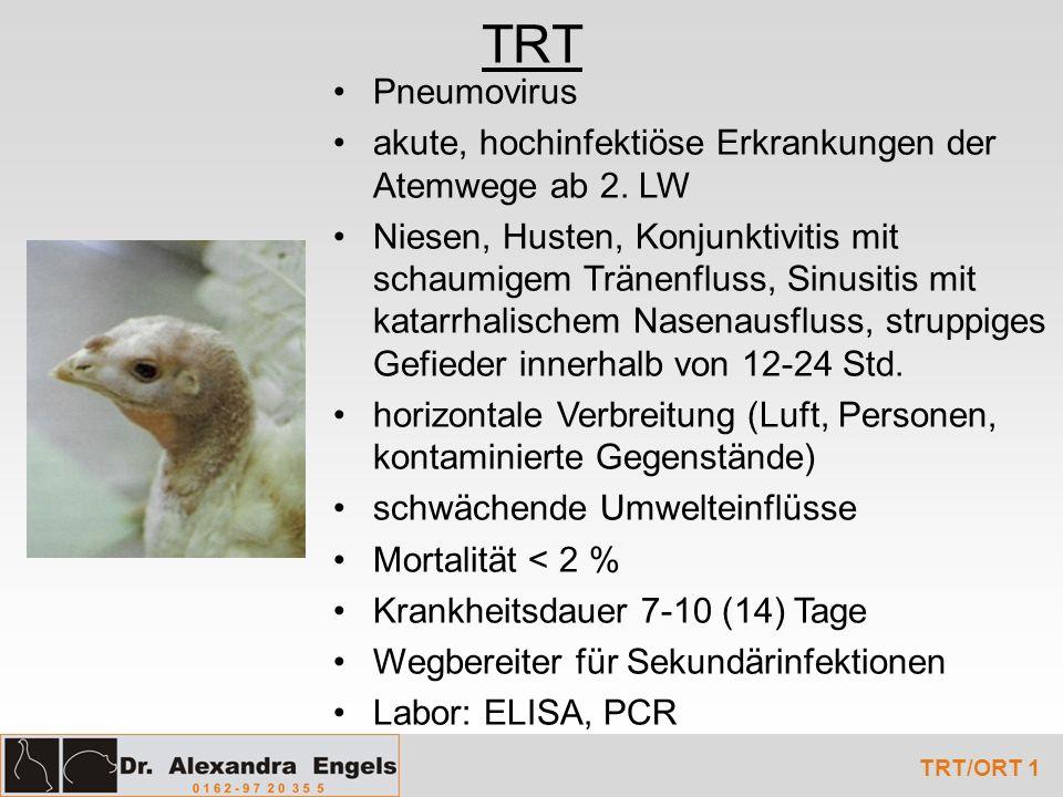 TRT Pneumovirus. akute, hochinfektiöse Erkrankungen der Atemwege ab 2. LW.