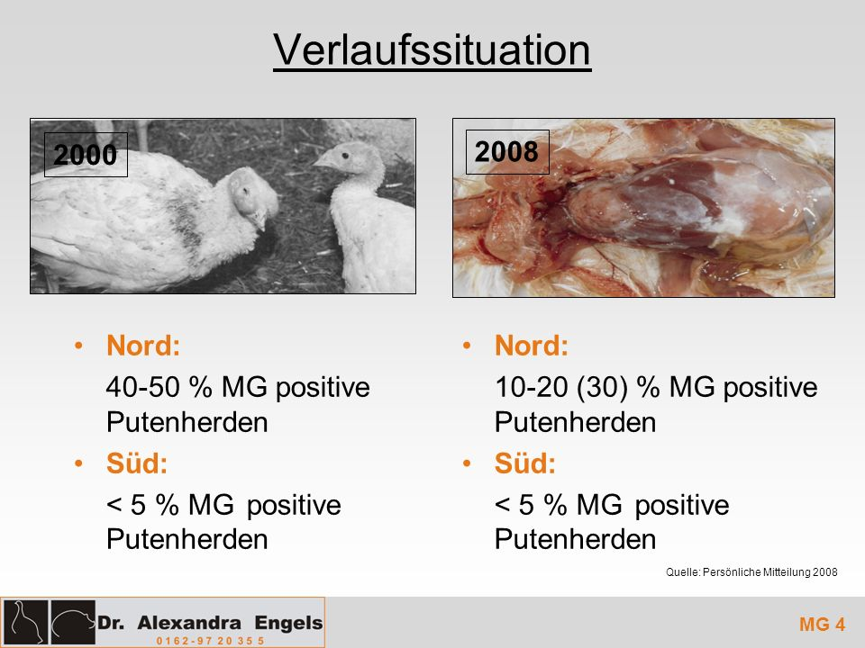 Verlaufssituation 2000 2008 Nord: 40-50 % MG positive Putenherden Süd: