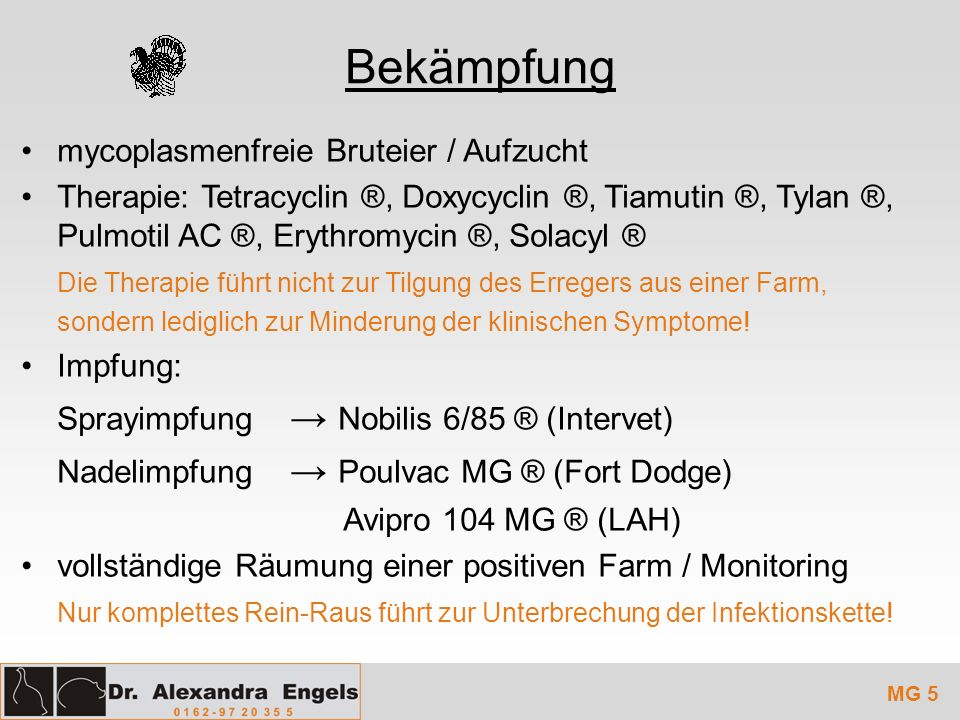 Bekämpfung mycoplasmenfreie Bruteier / Aufzucht