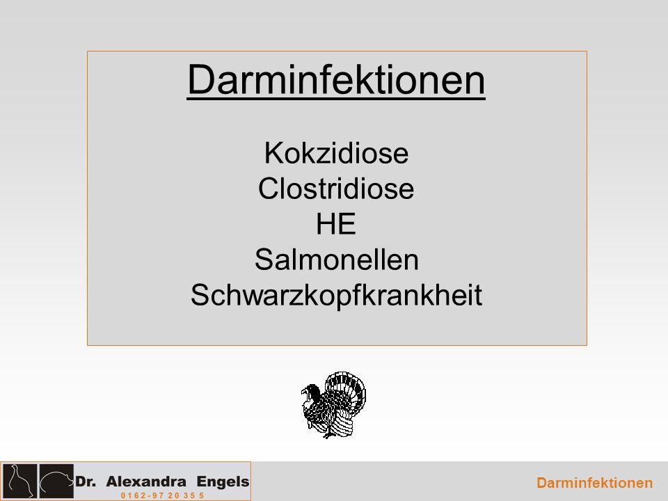 Darminfektionen Kokzidiose Clostridiose HE Salmonellen Schwarzkopfkrankheit