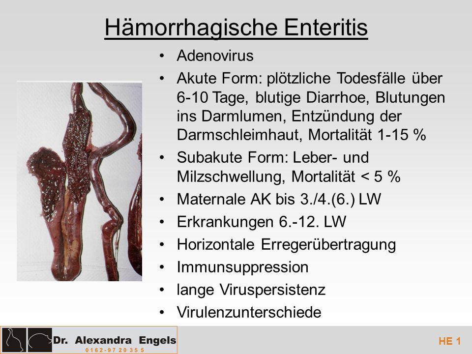 Hämorrhagische Enteritis