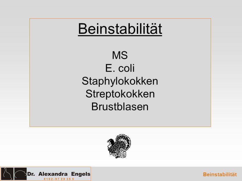 Beinstabilität MS E. coli Staphylokokken Streptokokken Brustblasen