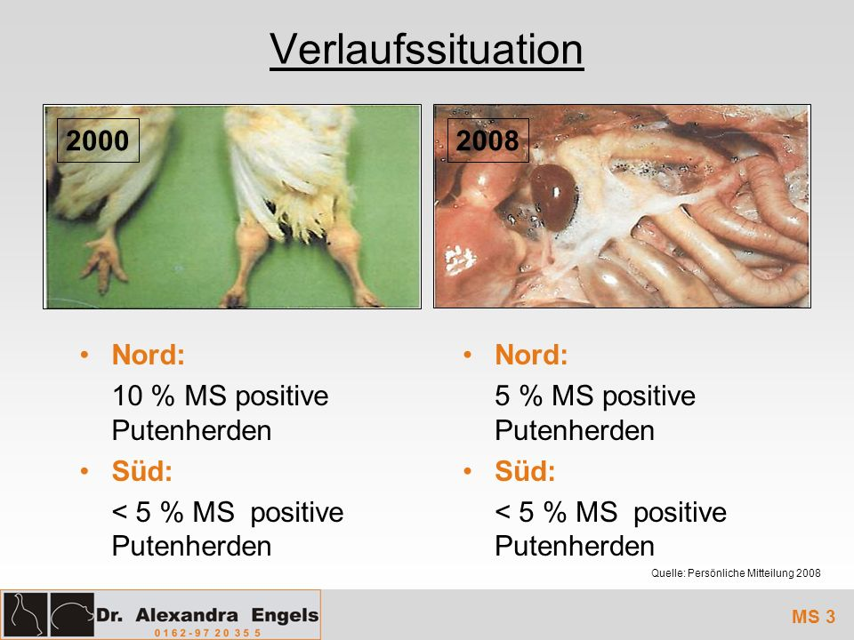 Verlaufssituation 2000 2008 2008 Nord: 10 % MS positive Putenherden