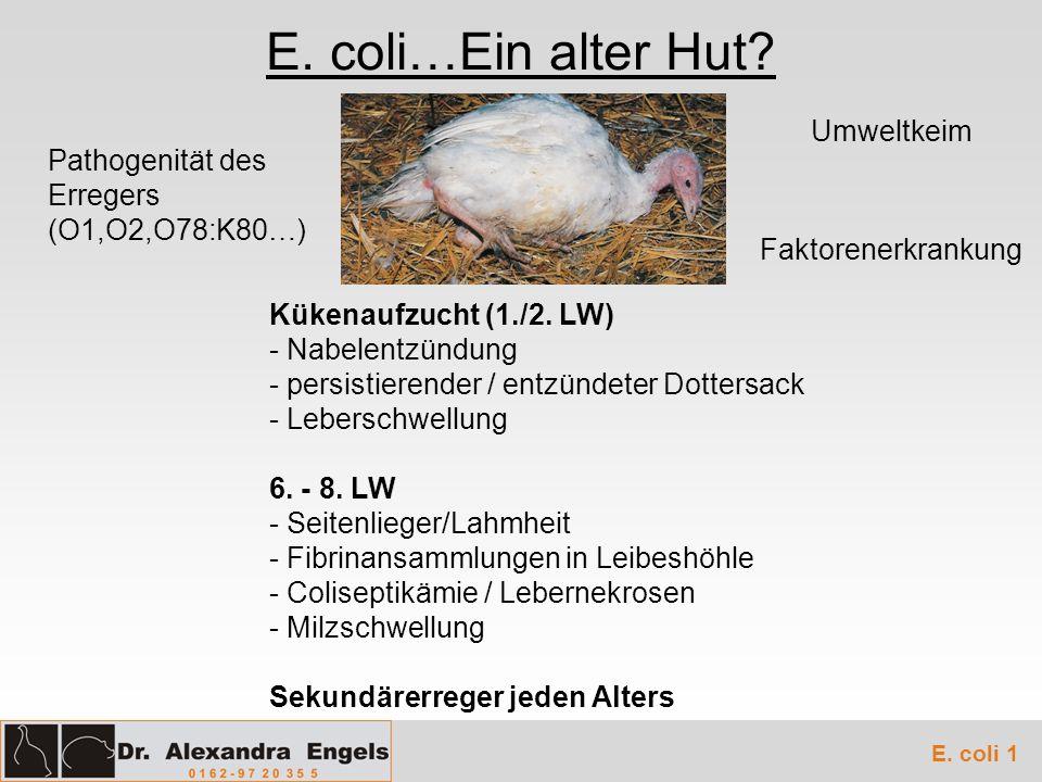 E. coli…Ein alter Hut Umweltkeim Pathogenität des Erregers