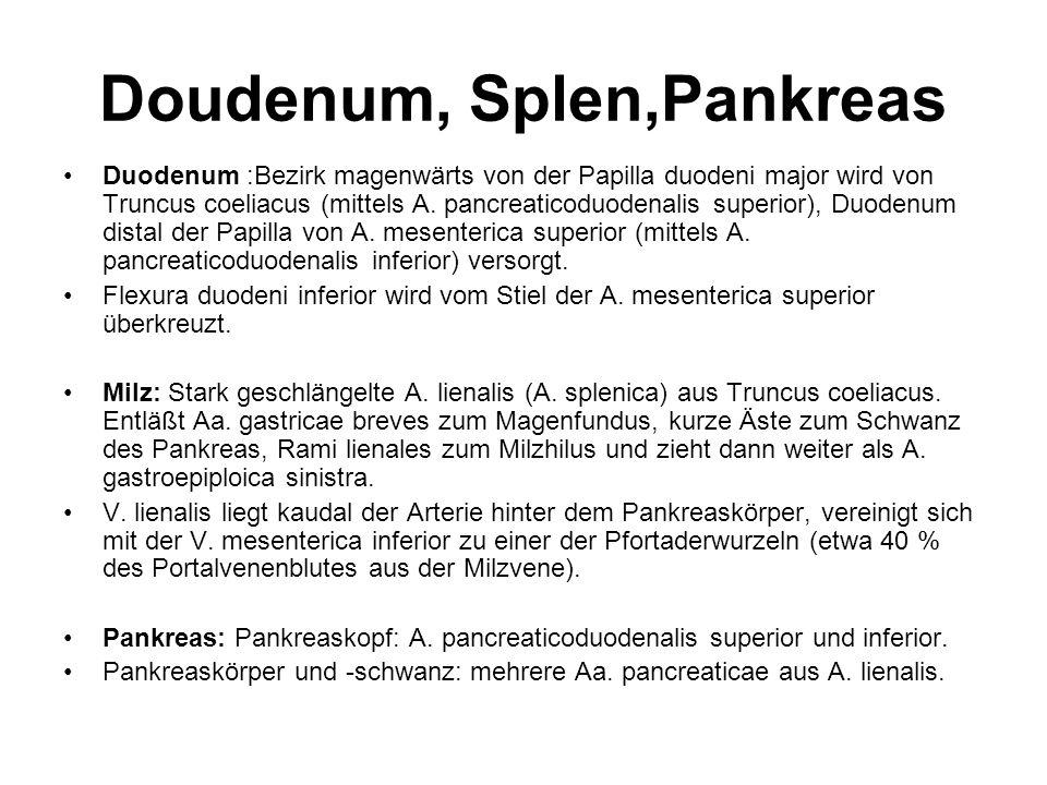 Doudenum, Splen,Pankreas