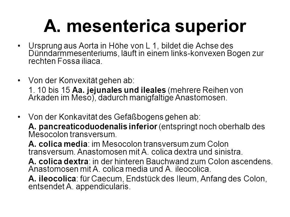A. mesenterica superior