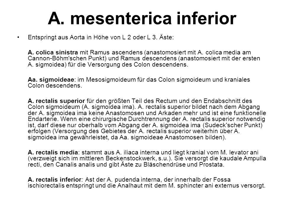 A. mesenterica inferior