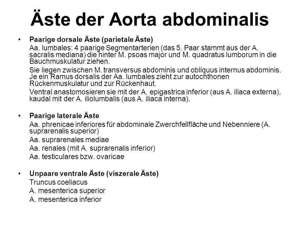 Äste der Aorta abdominalis