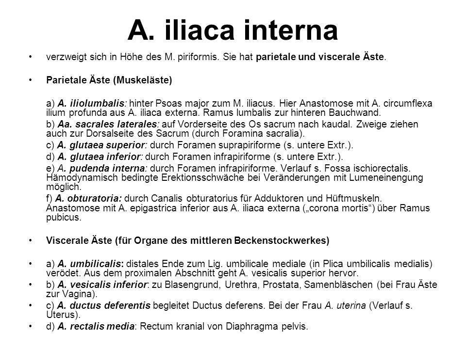 A. iliaca interna verzweigt sich in Höhe des M. piriformis. Sie hat parietale und viscerale Äste. Parietale Äste (Muskeläste)