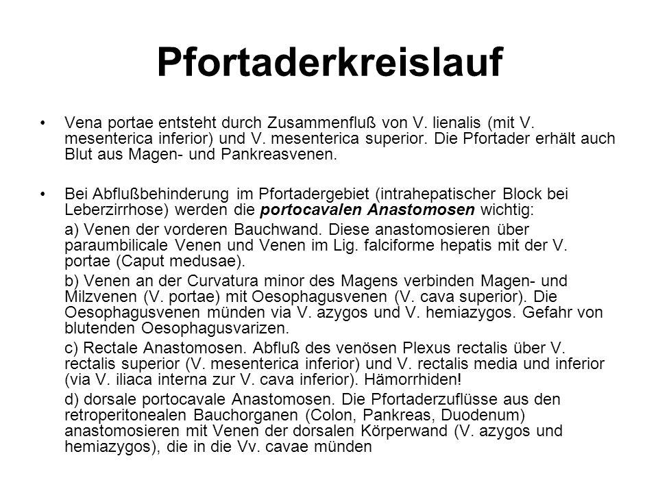 Niedlich Anatomie Pfortader Zeitgenössisch - Menschliche Anatomie ...