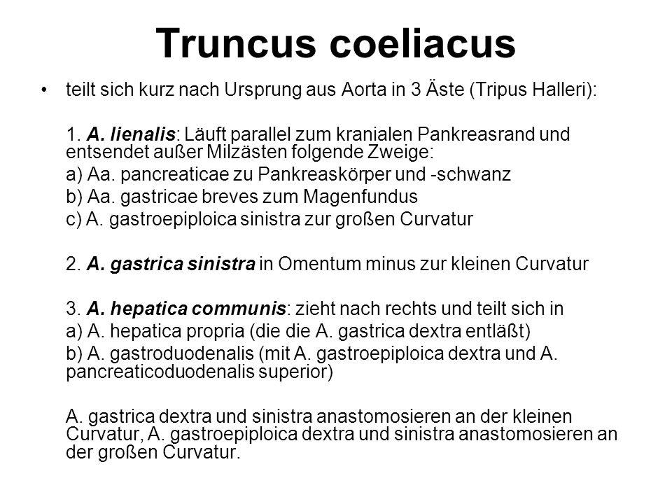 Truncus coeliacus teilt sich kurz nach Ursprung aus Aorta in 3 Äste (Tripus Halleri):