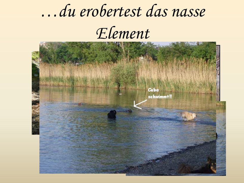 …du erobertest das nasse Element