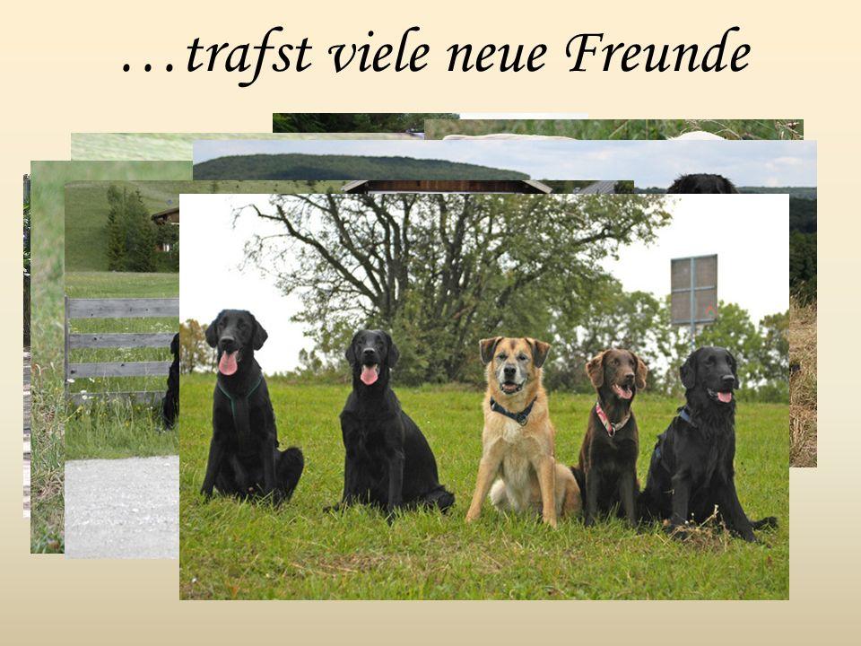 …trafst viele neue Freunde