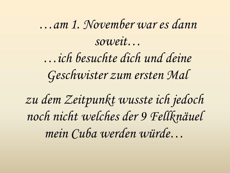 …am 1. November war es dann soweit…