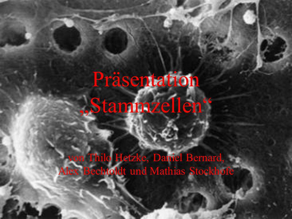 "Präsentation ""Stammzellen"