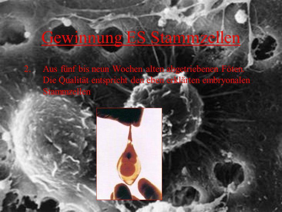 Gewinnung ES Stammzellen