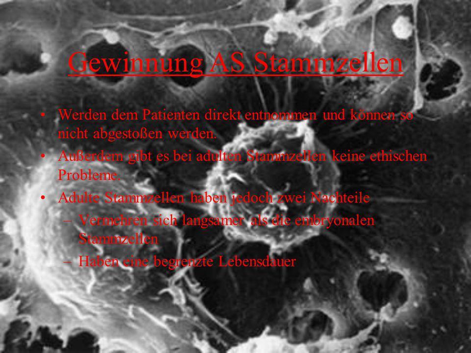 Gewinnung AS Stammzellen