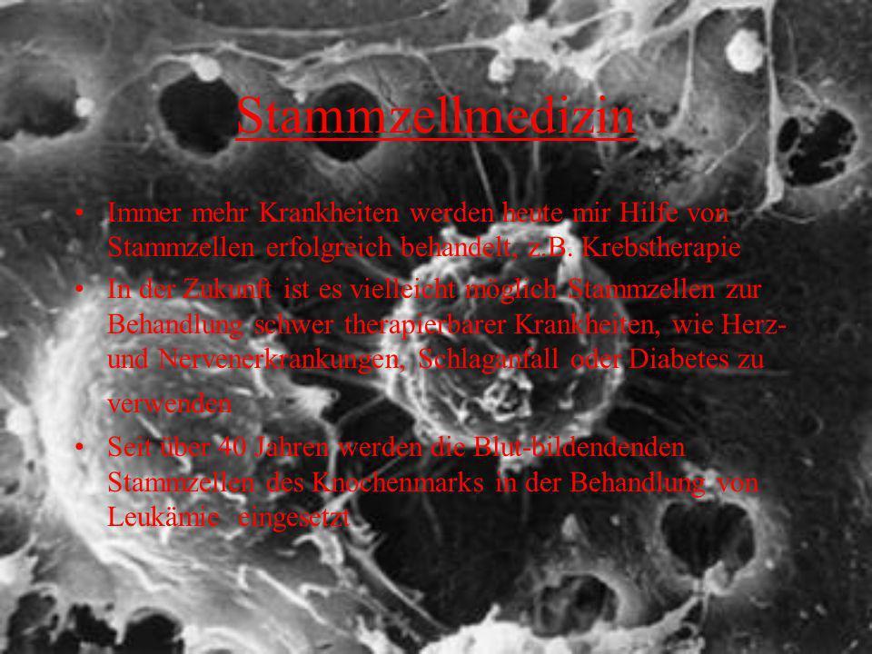 Stammzellmedizin Immer mehr Krankheiten werden heute mir Hilfe von Stammzellen erfolgreich behandelt, z.B. Krebstherapie.