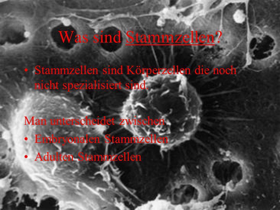 Was sind Stammzellen Stammzellen sind Körperzellen die noch nicht spezialisiert sind. Man unterscheidet zwischen.