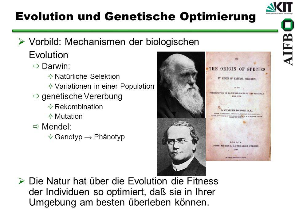 Evolution und Genetische Optimierung