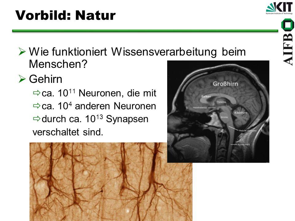 Vorbild: Natur Wie funktioniert Wissensverarbeitung beim Menschen