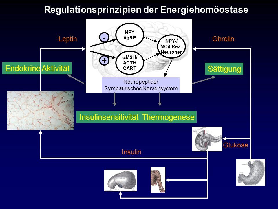 Sympathisches Nervensystem