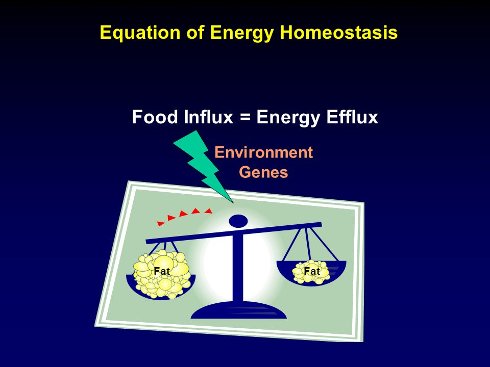Equation of Energy Homeostasis