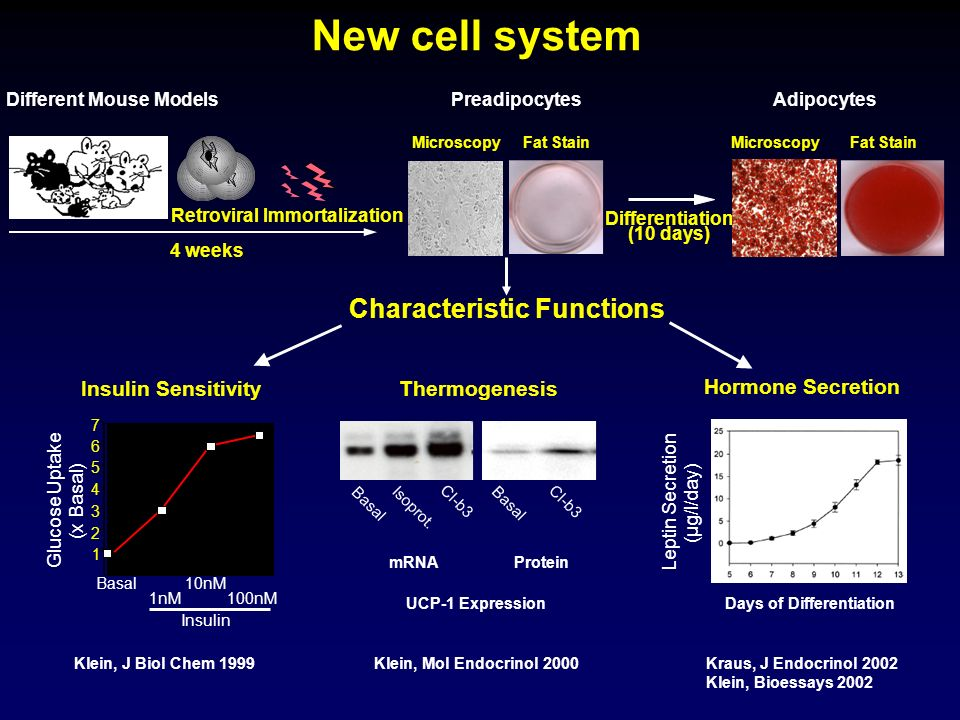 New cell system Characteristic Functions Thermogenesis