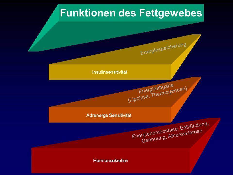 Funktionen des Fettgewebes