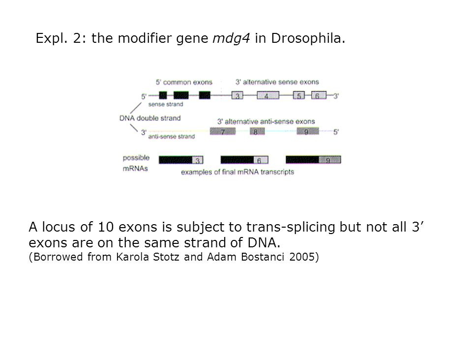 Expl. 2: the modifier gene mdg4 in Drosophila.