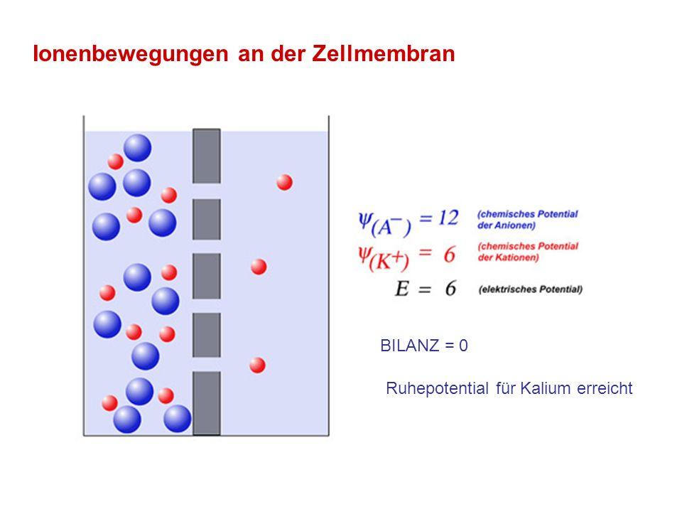 Ionenbewegungen an der Zellmembran