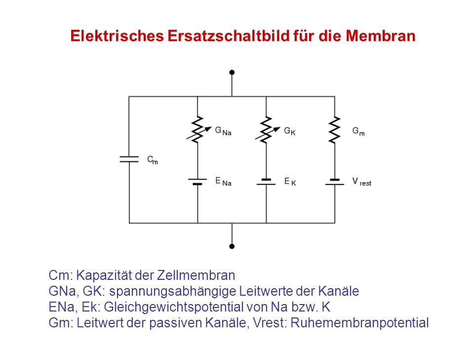 Elektrisches Ersatzschaltbild für die Membran