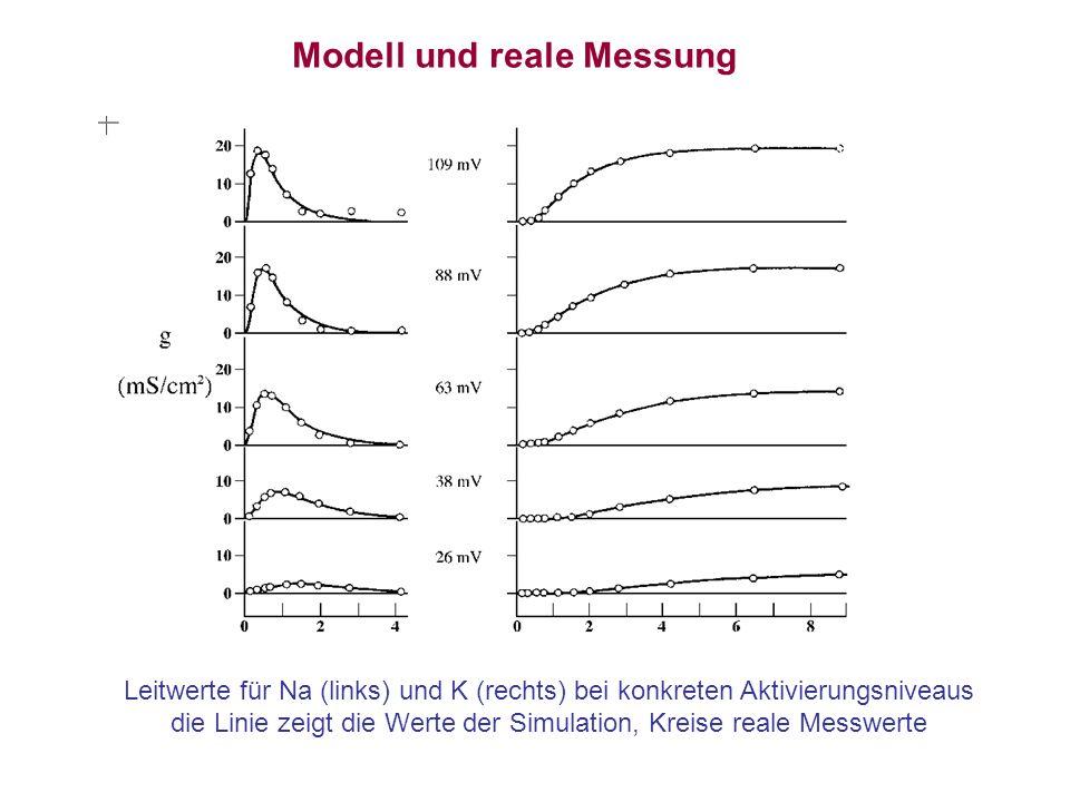 Modell und reale Messung