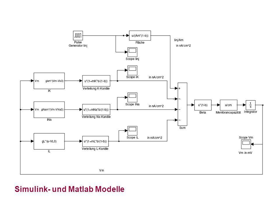 Simulink- und Matlab Modelle