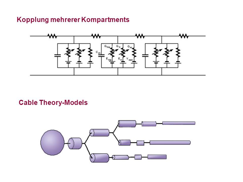 Kopplung mehrerer Kompartments