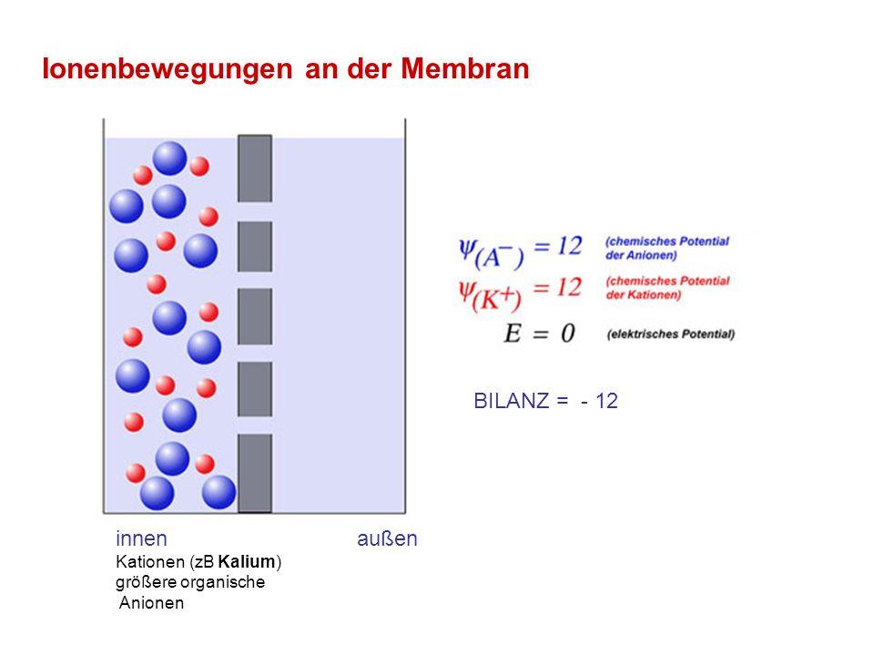 Ionenbewegungen an der Membran