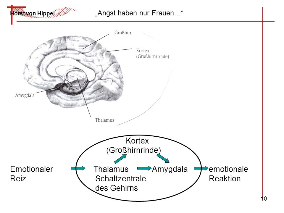 Emotionaler Thalamus Amygdala emotionale Reiz Schaltzentrale Reaktion