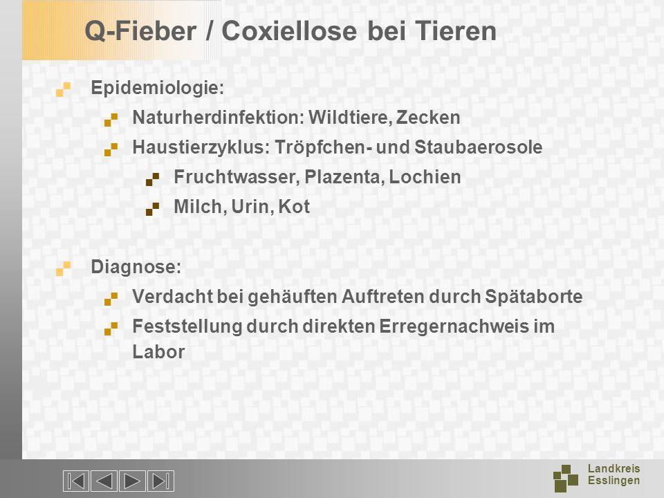 Q-Fieber / Coxiellose bei Tieren