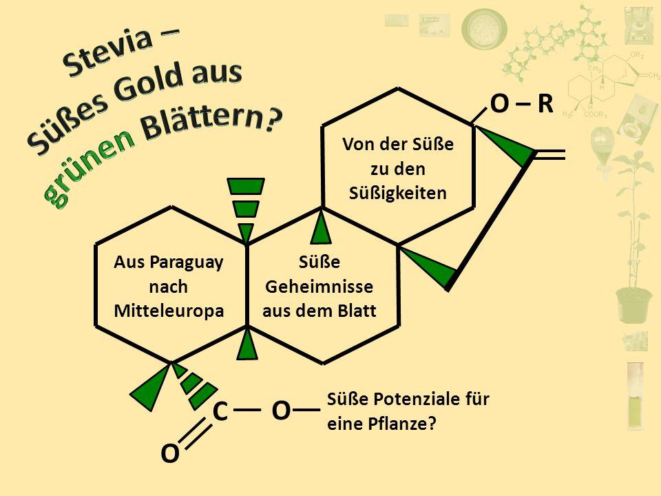 Stevia – Süßes Gold aus grünen Blättern