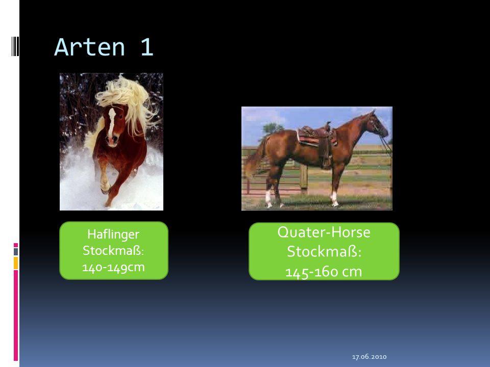 Arten 1 Quater-Horse Stockmaß: 145-160 cm Haflinger