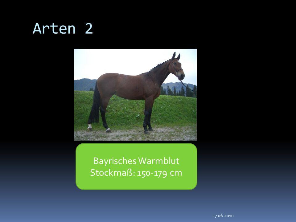 Arten 2 Bayrisches Warmblut Stockmaß: 150-179 cm 17.06.2010