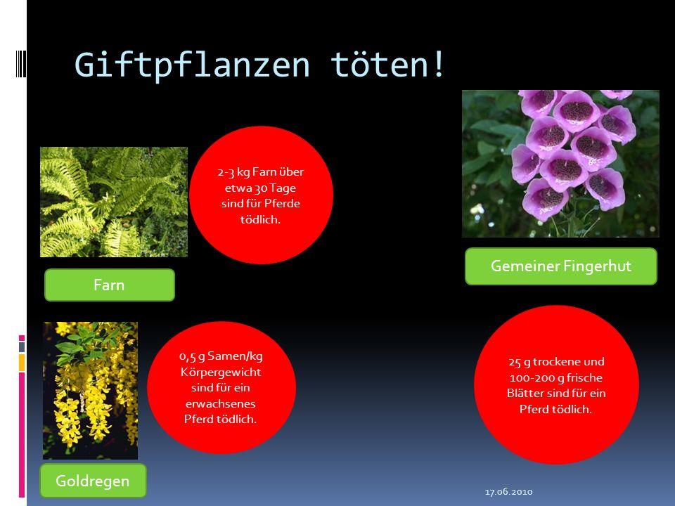 Giftpflanzen töten! Gemeiner Fingerhut Farn Goldregen