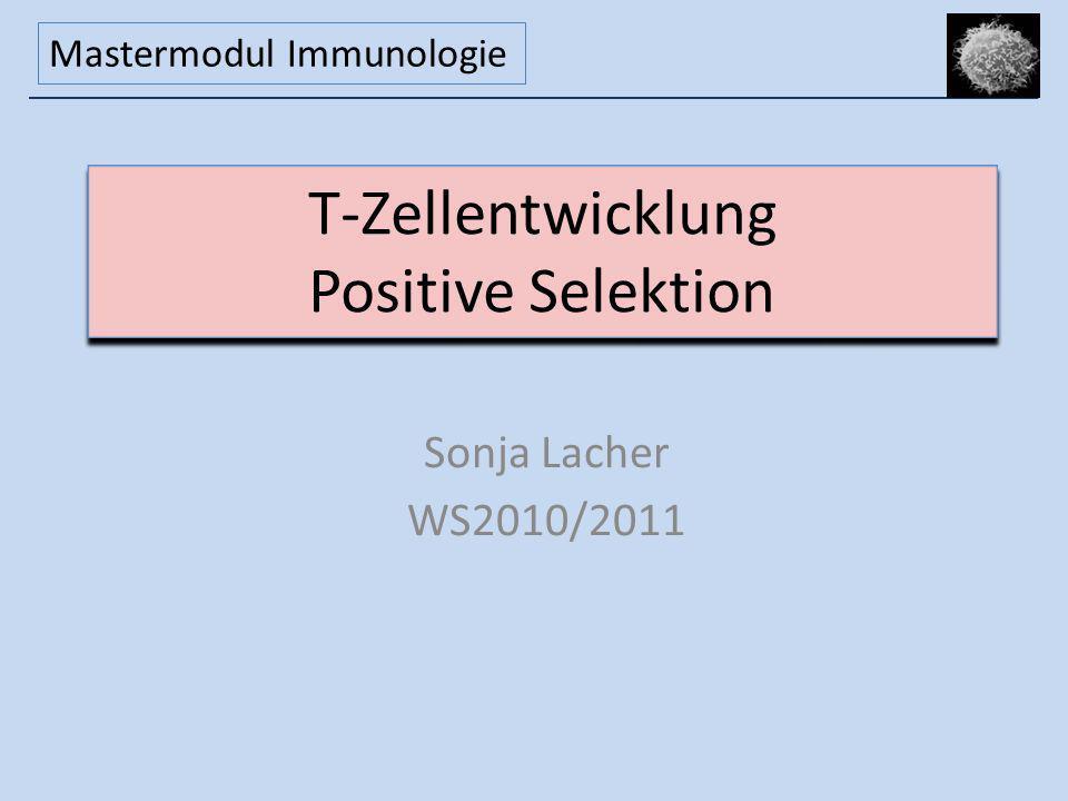 T-Zellentwicklung Positive Selektion